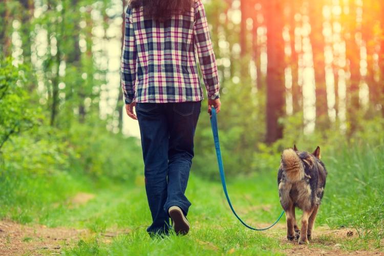 dogwalkroutine
